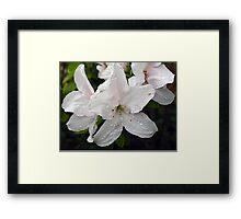 White Azalea II Framed Print