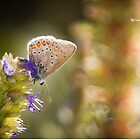 Butterfly on the spot by Stwayne
