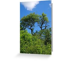 Old lonely tree springtime Greeting Card