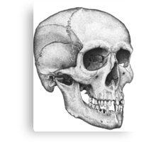 Human Male Skull Canvas Print