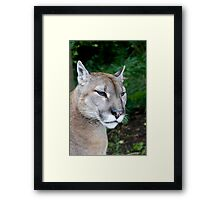 Portrait Of A Puma Framed Print