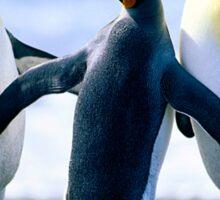 Penguin Freinds Animal Designs Sticker