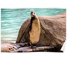 Poser Penguin Poster