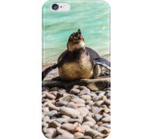 Belly Sliding Penguin iPhone Case/Skin