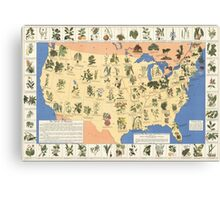 1932 Medicinal Plant Map of the United States. Amazing map of 'Herbal Cures' Canvas Print