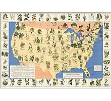 Amazing map of 'Herbal Cures' from 1932 Photographic Print