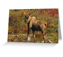 Maine Bull Moose in the fall Greeting Card