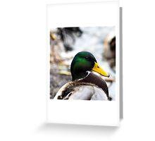 Duck Portrait Greeting Card