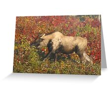 Maine Piebald Bull Moose  Greeting Card