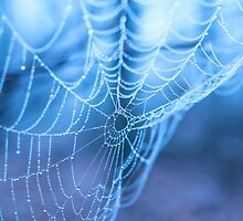 Spider web with water droplets on a blue background by aquapixel