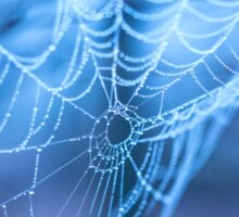 Spider web with water droplets on a blue background Sticker
