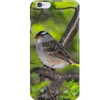 White-Crowned Sparrow iPhone Case/Skin