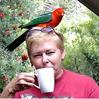 Parrot coffee, Killarney, Qld, Australia by sandysartstudio