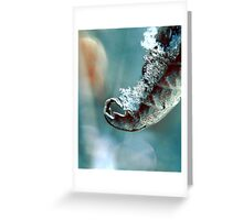 Sweet Clarity  Greeting Card
