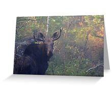 Maine Bull Moose in the woods at dawn Greeting Card