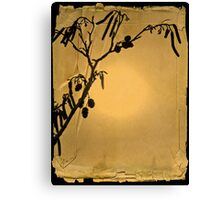 Catkin on paper Canvas Print
