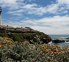 Pigeon Point Lighthouse with Poppies by Judy Vincent