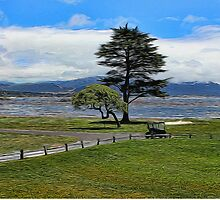 Pebble Beach Painted by Judy Vincent