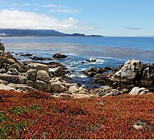 Monterey by Judy Vincent