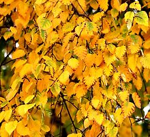 Autumn Leaves 4 by Havocgirl