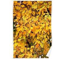 Autumn Leaves 4 Poster
