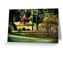 The Little Red Maple Greeting Card