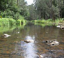 Tallebudgera Creek in the Summertime by aussiebushstick
