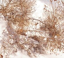 Winter Nest, 2011 by Claudia Smaletz