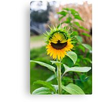 SUNFLOWER BEAUTY Canvas Print