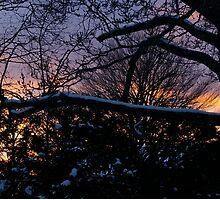 Beauty of Winter, II by Claudia Smaletz