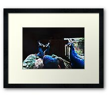 Love in Peacocks Framed Print