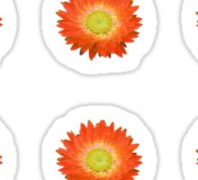 Daisy - Orange and Yellow Sticker