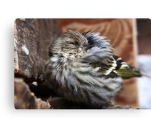 Baby Yellow Finch Canvas Print