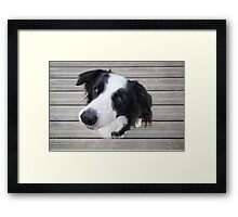 Mila on the Deck Framed Print