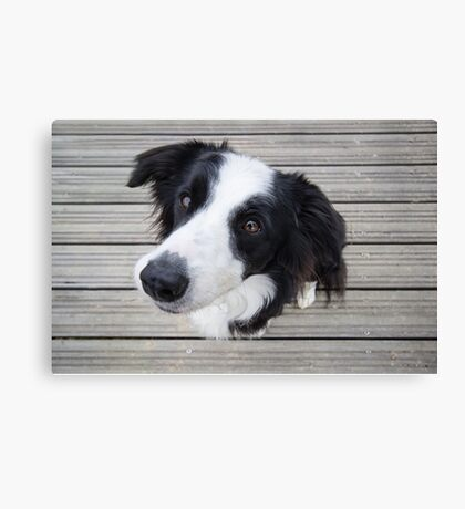 Mila on the Deck Canvas Print