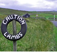 Caution Lambs by Chris Monks