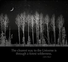 The clearest way to the Universe is through a forest wilderness. by Alex Preiss