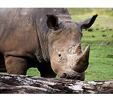 White Rhinoceros Photographic Print