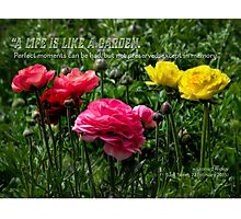 A life is like a garden… Photographic Print