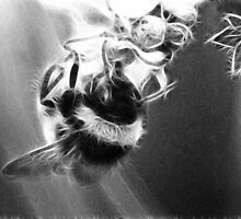 Bumble bee by davesphotographics