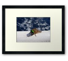 Insect traveling along Framed Print