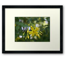 Close Up Of Carolina Jasmine Framed Print