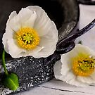 White Poppy by artsandsoul