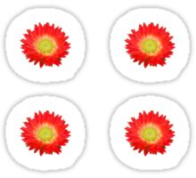 Daisy - Red and Yellow Sticker