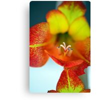 Sword Lilly Canvas Print