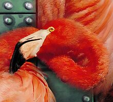 flamingo by arteology