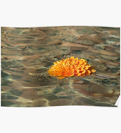 Floating Sunshine - a Vivid Orange Chrysanthemum in Velvety Fountain Reflections Poster