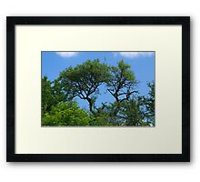 Old lonely tree  Framed Print