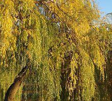 Willow Tree by Mezei József Tibor