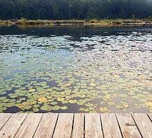 Pond of lilies  by ONiONAstudio